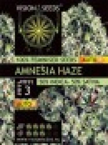 Amnesia Haze Auto 3
