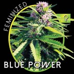 Blue Power Fem 3