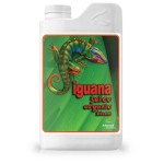 Iguana Juice Bloom 1