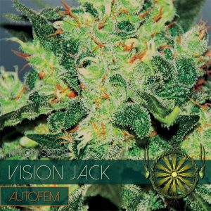 VISION JACK AUTO 3