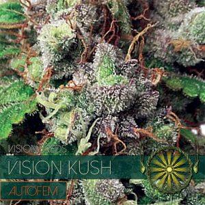 VISION KUSH AUTO 3