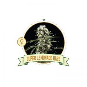 Super Lemon Haze Fem